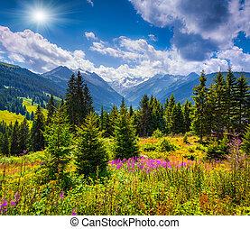 Summer sunny scene in the valley of Speicher Durlassboden ...