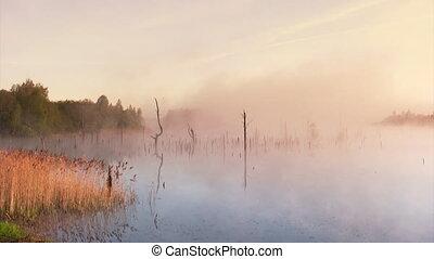 Summer sunrise in the swamp