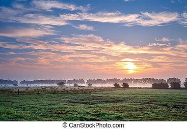 summer sunrise over Dutch pastora, Groningen, Netherlands