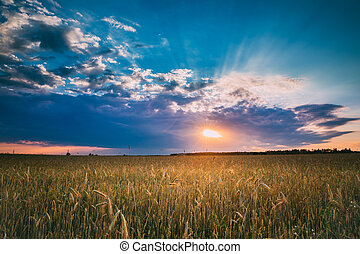 Summer Sunset Evening Above Countryside Rural Wheat Field ...