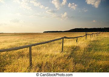 summer sunset on the field.