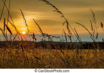 summer sunset over grass field