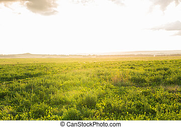 summer sunset over green grass field near agriculture farm land