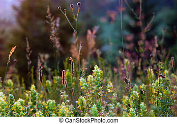 Beautiful summer sunset wildflowers on mountain glade near forest