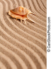 Summer time concept with seashells on brown sand background. Selective focus.