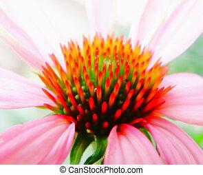 Macro detail of flower