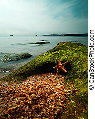 Summer time on the sea. Starfish over sand close to rock