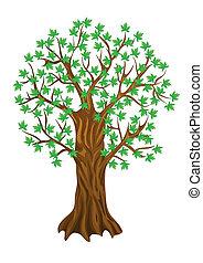summer tree,