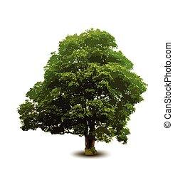 summer tree vector illustration - summer big tree vector...
