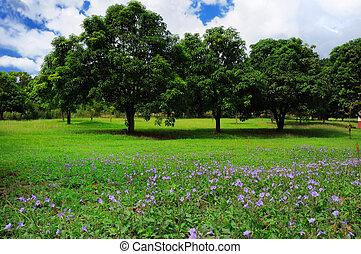 Summer trees landscape - Three mango trees on green field...