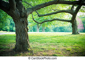 Lovely summer trees and grass in park setting