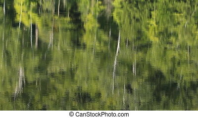 Summer trees reflected in lake.
