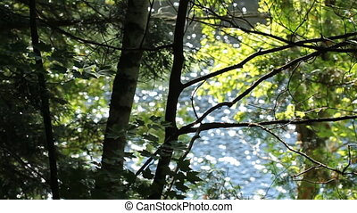 Summer trees with sparkling lake. - Summer trees with...