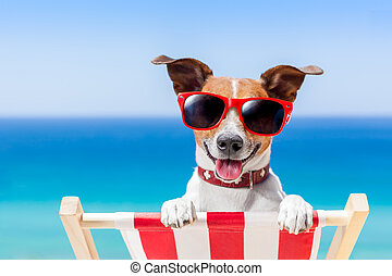 summer vacation dog - dog relaxing on a fancy deck chair