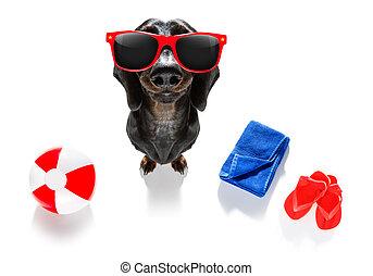 summer vacation holiday dog