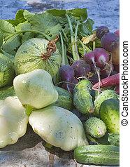 Summer vegetable harvest