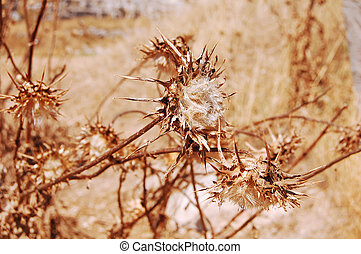 Summer vegetation of the Murgia in Basilicata - Italy