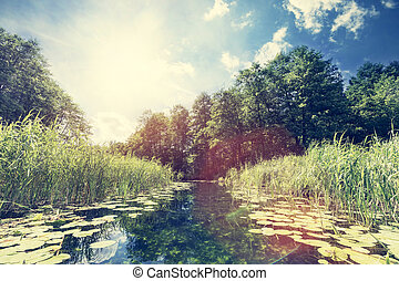 Summer view of a river in the woods. Water pass with amazing...