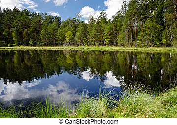 Summer view of the lake in forest