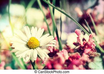 Summer wild flowers closeup