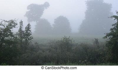 summer wild landscape and mist