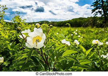 Summer Wildflowers - fleld flowers