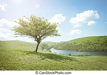 Summers Day Tree