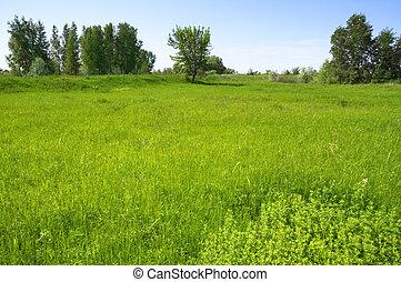 summertime background - summer landscape