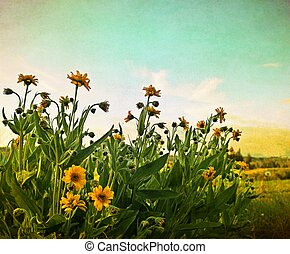 Summertime in Alaska with yellow flowers and blue sky ...