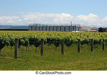 Summertime in the vineyard