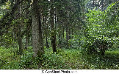 Summertime look of natural alder-carr stand - Summertime ...