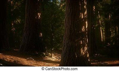 summertime, sequoia, bomen, 8k, park, nationale, reus