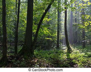 Summertimel misty morning in the forest