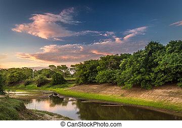 sumpfgebiet, pantanal, landschaftsbild