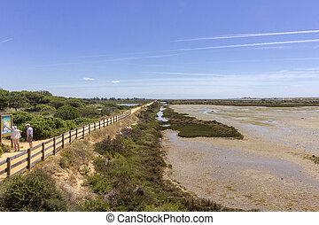 sumpfgebiete, südlich, qdl, reserve, portugal., algarve,...