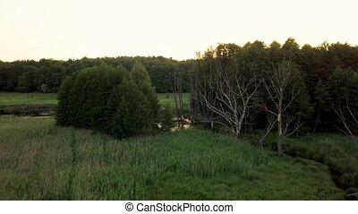 sumpfig, Luftaufnahmen, aus, gelände, Wälder, Verfilmung