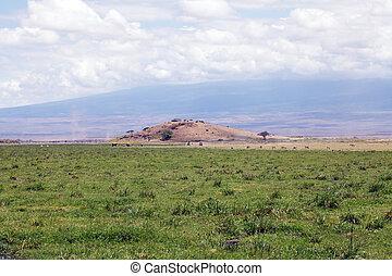 sumpmark, hos, den, amboseli nationell park, kenya