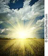 sumrise on a wheat field