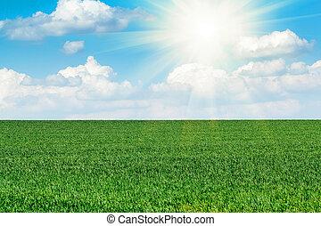 Sun and field of green fresh grass under blue sky