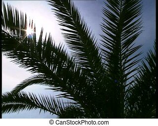 SUN and palm leaves 1 - Sun through palm leaves