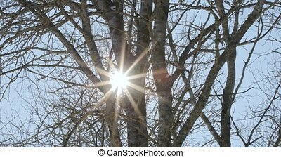 sun and rays of light through dry branches of trees.