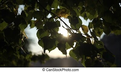 Sun at sunrise or sunset through tree leafs