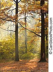 sun beam lit lawn in autumn forest