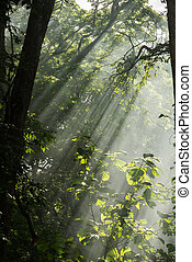 Sun beam through the tree in forest