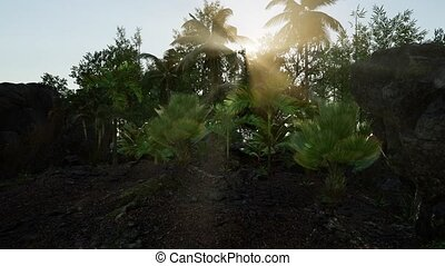Sun beams of light penetrating dense lush green canopy of...