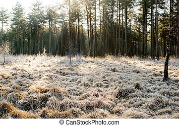 Sun beams on frosted grass