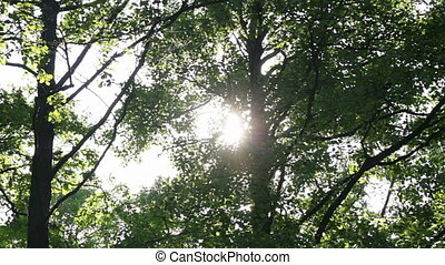 Sun behind the foliage