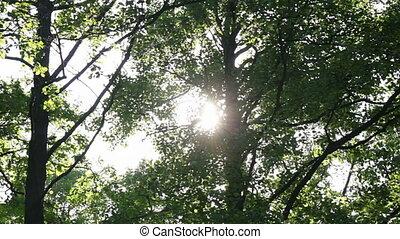 Sun behind the foliage
