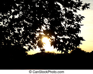 Sun behind the trees