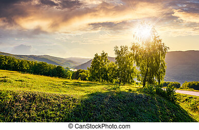sun behind the trees on hillside. lovely nature scenery in...